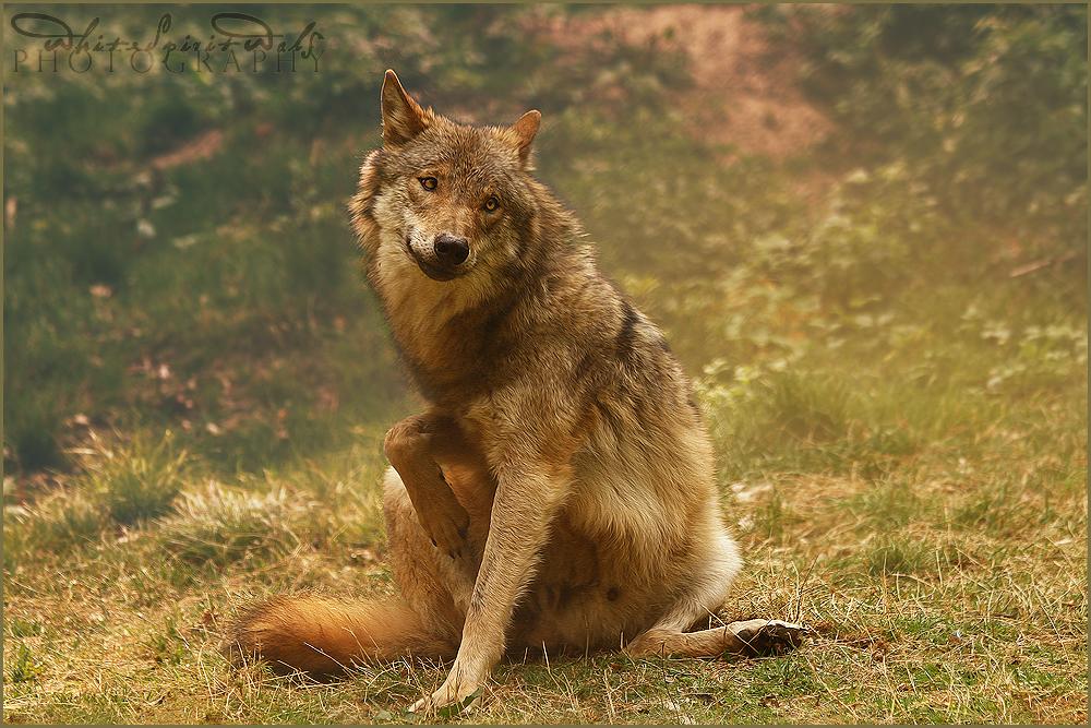 .: Crazy Woof :. by WhiteSpiritWolf