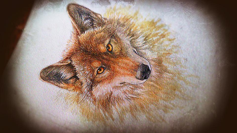 - Grey Wolf - by WhiteSpiritWolf