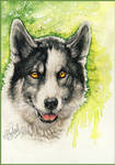 .: Happy Husky :. by WhiteSpiritWolf
