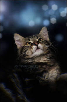 .: Dream of a Kitty :.