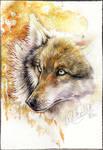 .: Wild Beauty :.