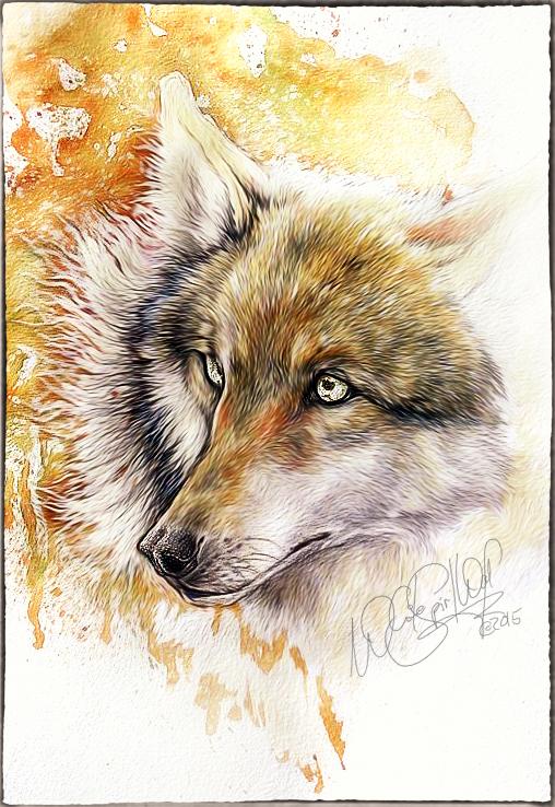.: Wild Beauty :. by WhiteSpiritWolf