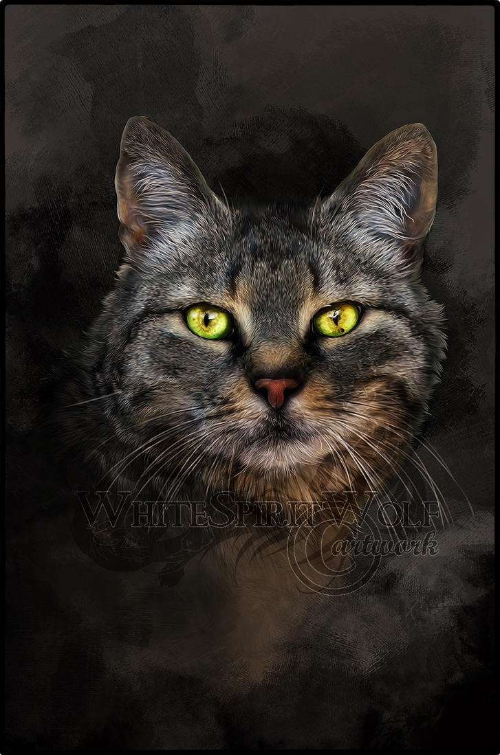 Sladdy .:. tribute of a wonderful cat by WhiteSpiritWolf