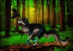 .: Forest Run :.