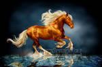 .: Beautiful Stallion :.