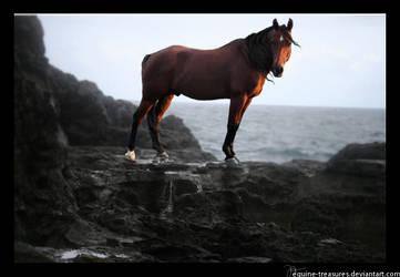 Dawn Bearer by equine-treasures
