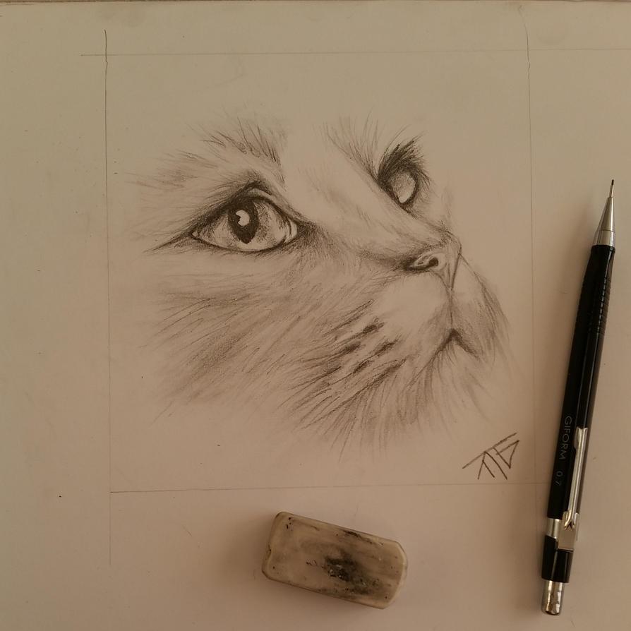 cat face by Taigatanfan