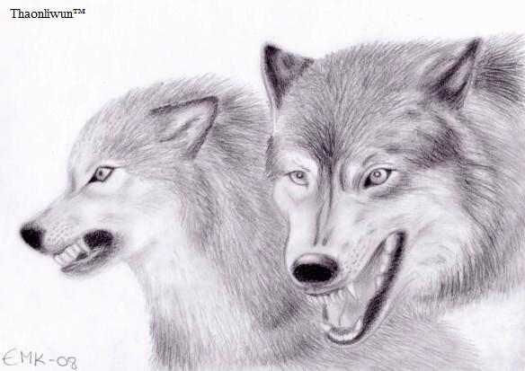 Aggresive Wolfs