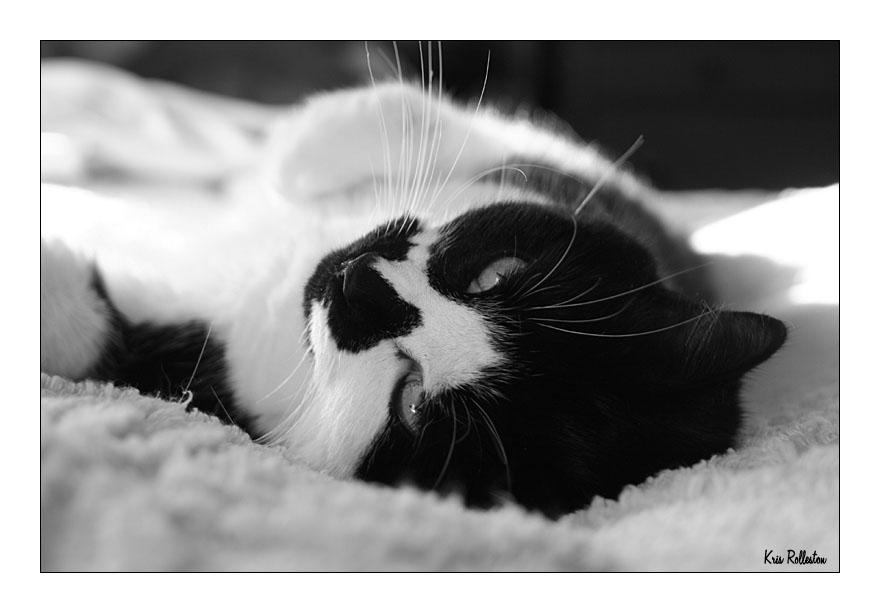 Piney's Profiles Cat_in_Black_and_White_by_runnerboy49