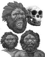 H Floresiensis again by povorot
