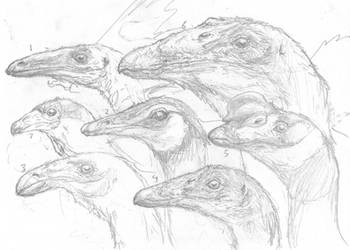 Troodontid Head Study WIP by povorot