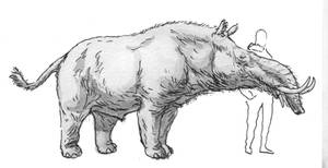 The Almost-tapir