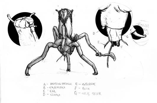 Alien anatomy work in progress