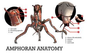 Amphoran Anatomy by povorot
