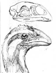 Avimimus sketch by povorot