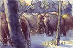 Mammoth Study Winter
