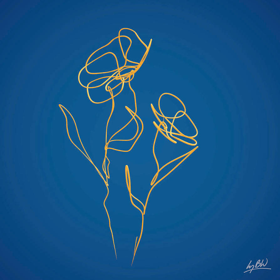 Flowers-line-drawing-2-lucy-boyd-wilson