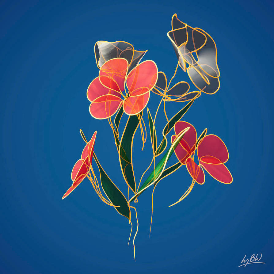Flowers-line-drawing-6-lucy-boyd-wilson
