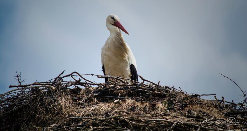 Stork by nuffy00