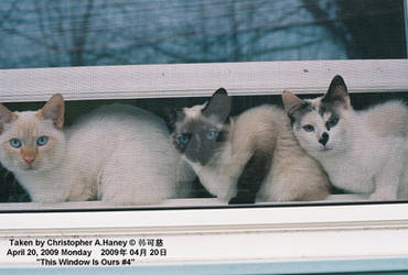This Window Is Ours 4