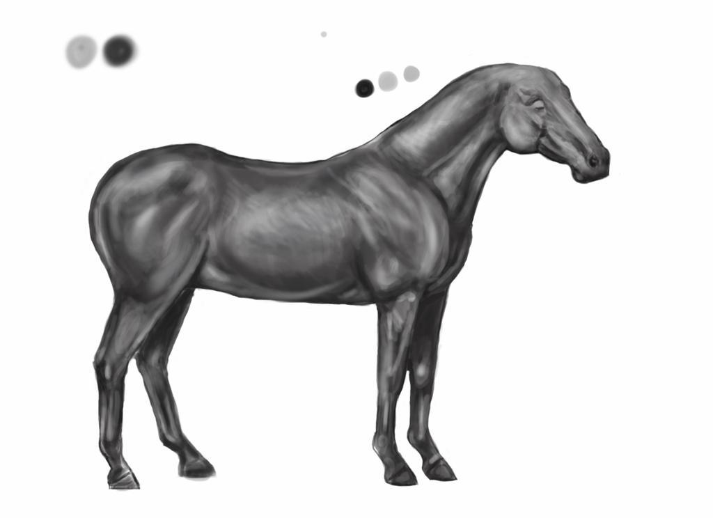 Horse Breed-Colorado Ranger-in progress by LuminaMaridia