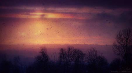 Evening Snowfall