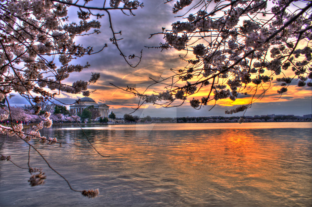 Cherry Blossom Sunset by PhorionImaging
