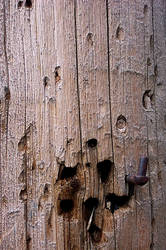 Dogwood by MrWednesday