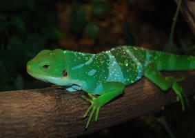 My green friend by alfaromeogirl