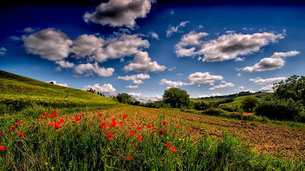 Tuscan Poppy fields