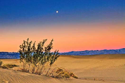 Moon Over Mesquite Flats