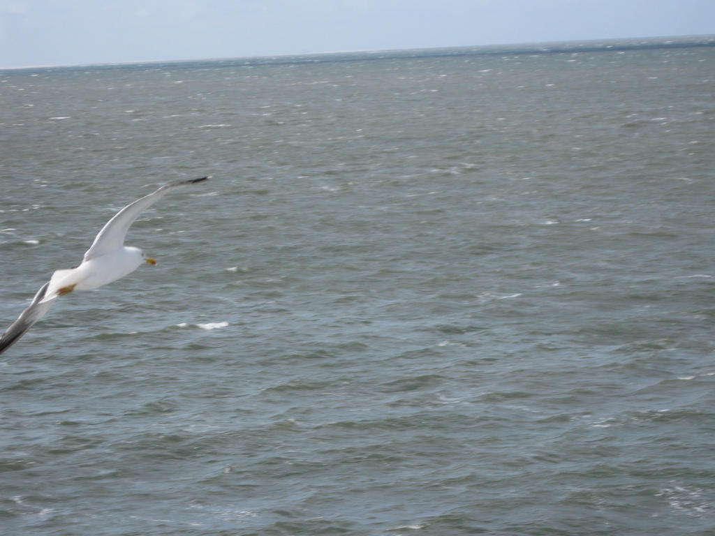 Another Seagull