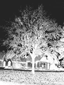 The Tree is Black and White