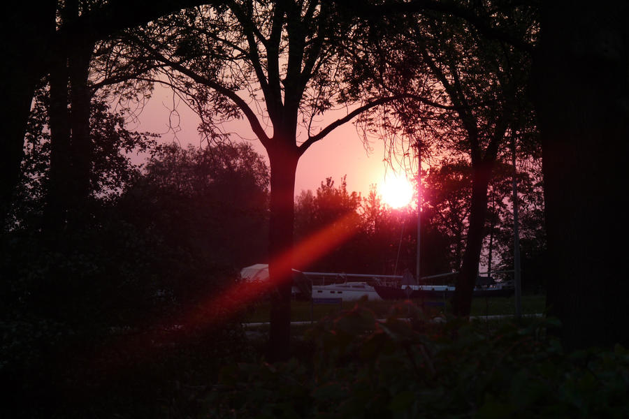 The Red Sunlight