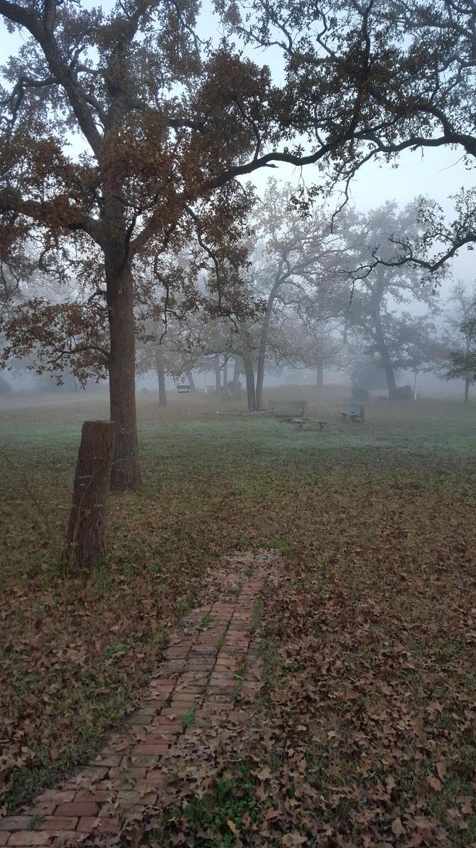 fog at the pond by urbuddy