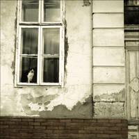 window by VesnaSvesna