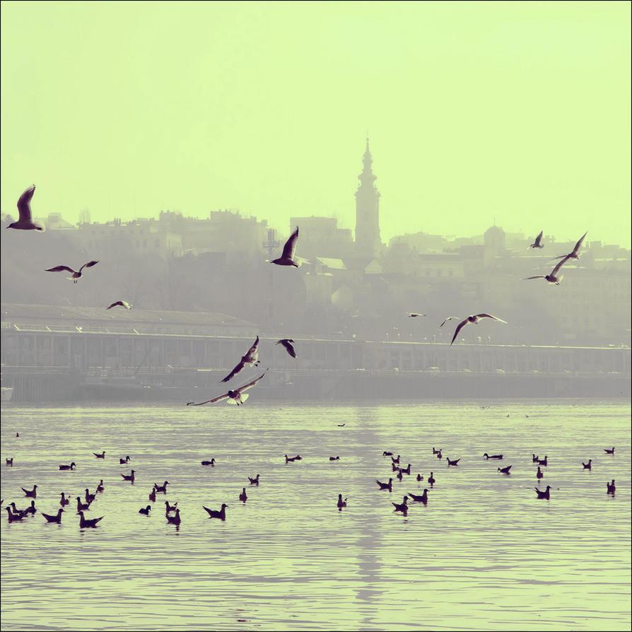 free as a bird by VesnaSvesna