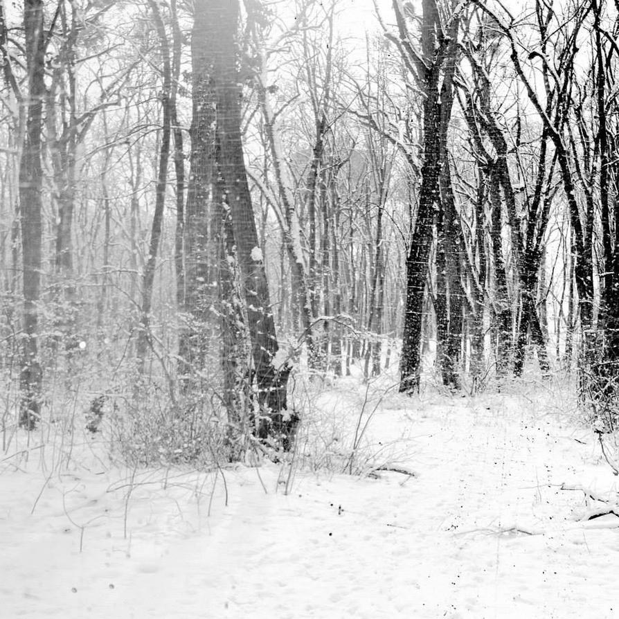 winter forever by VesnaSvesna