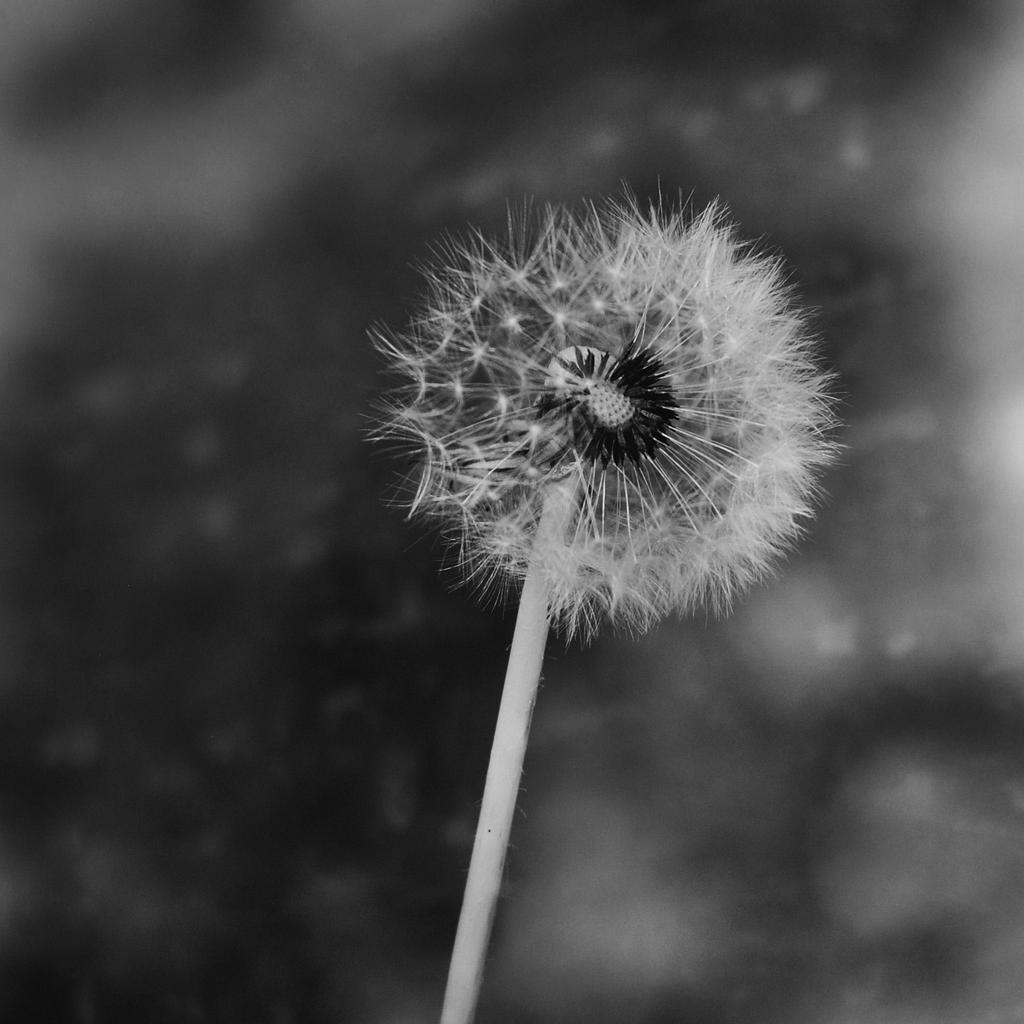 last wish by VesnaSvesna