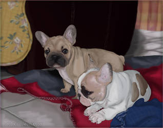 .: Daroma - Diego :. by Meoxie