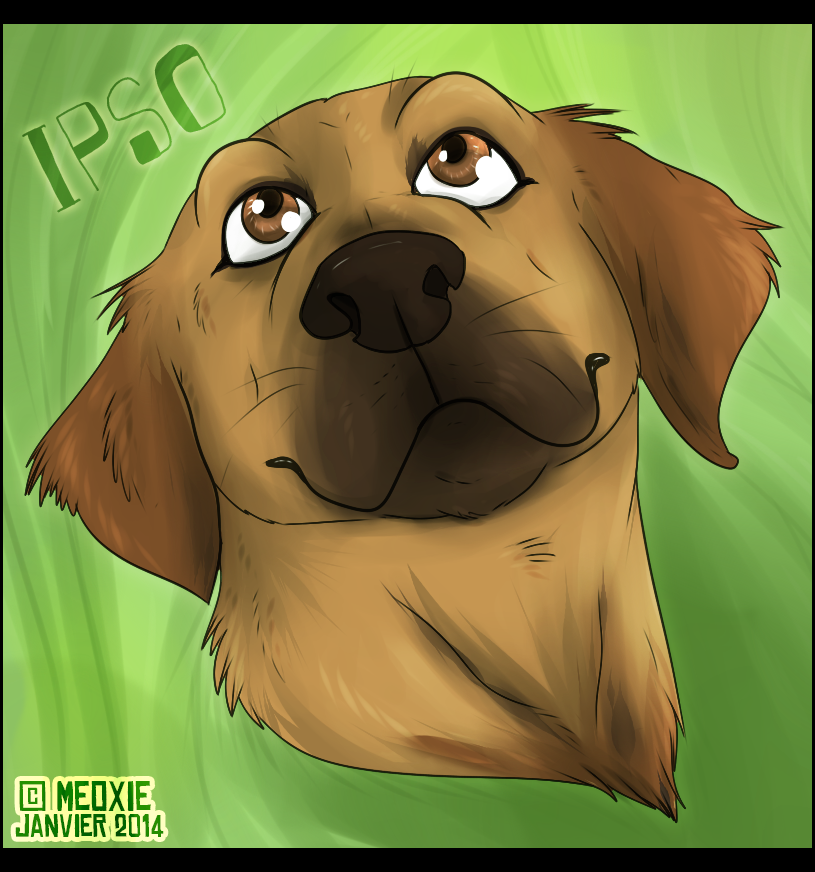 Portrait animalier digital [20€ dont 10€ pour don refuge] ___ipso__commish_refuge__by_meoxie-d72n7z4