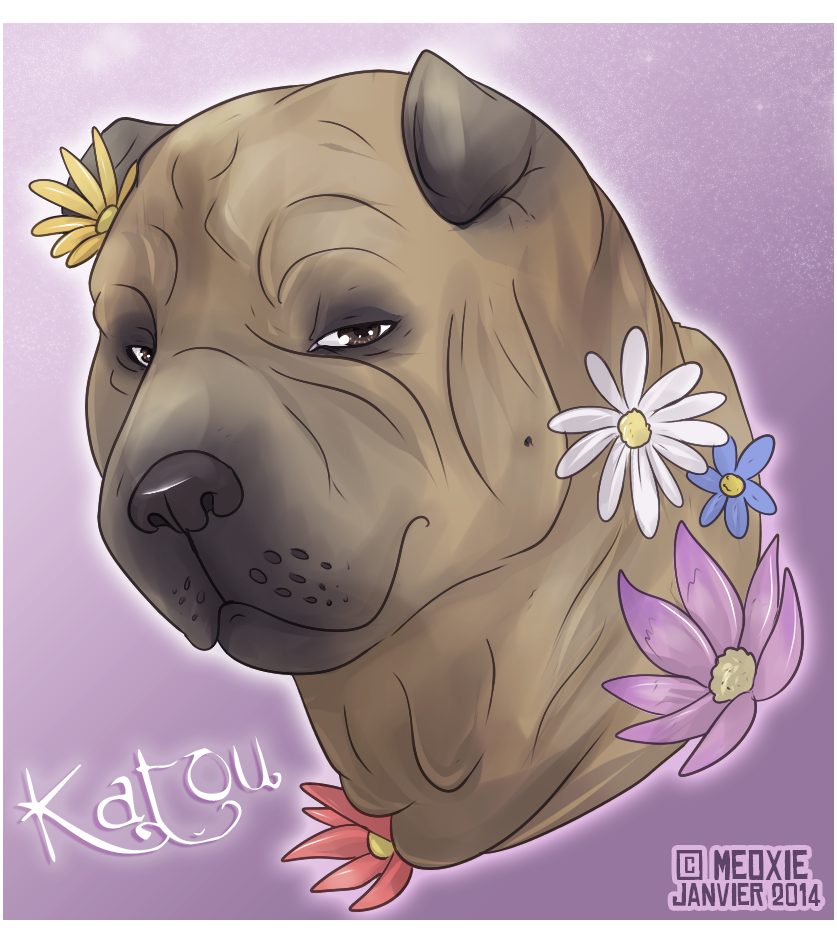 Portrait animalier digital [20€ dont 10€ pour don refuge] ___katou__commish_refuge__by_meoxie-d73j56w
