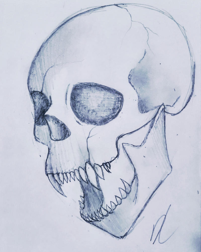 Skull sketch by sakuwolf666