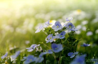 Flower Field by Enkidulan