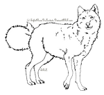 Wolf Template 2