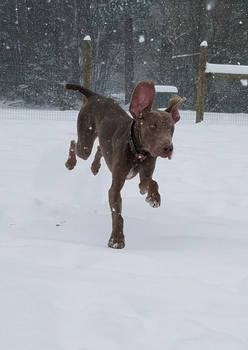 Daryl's First Snow