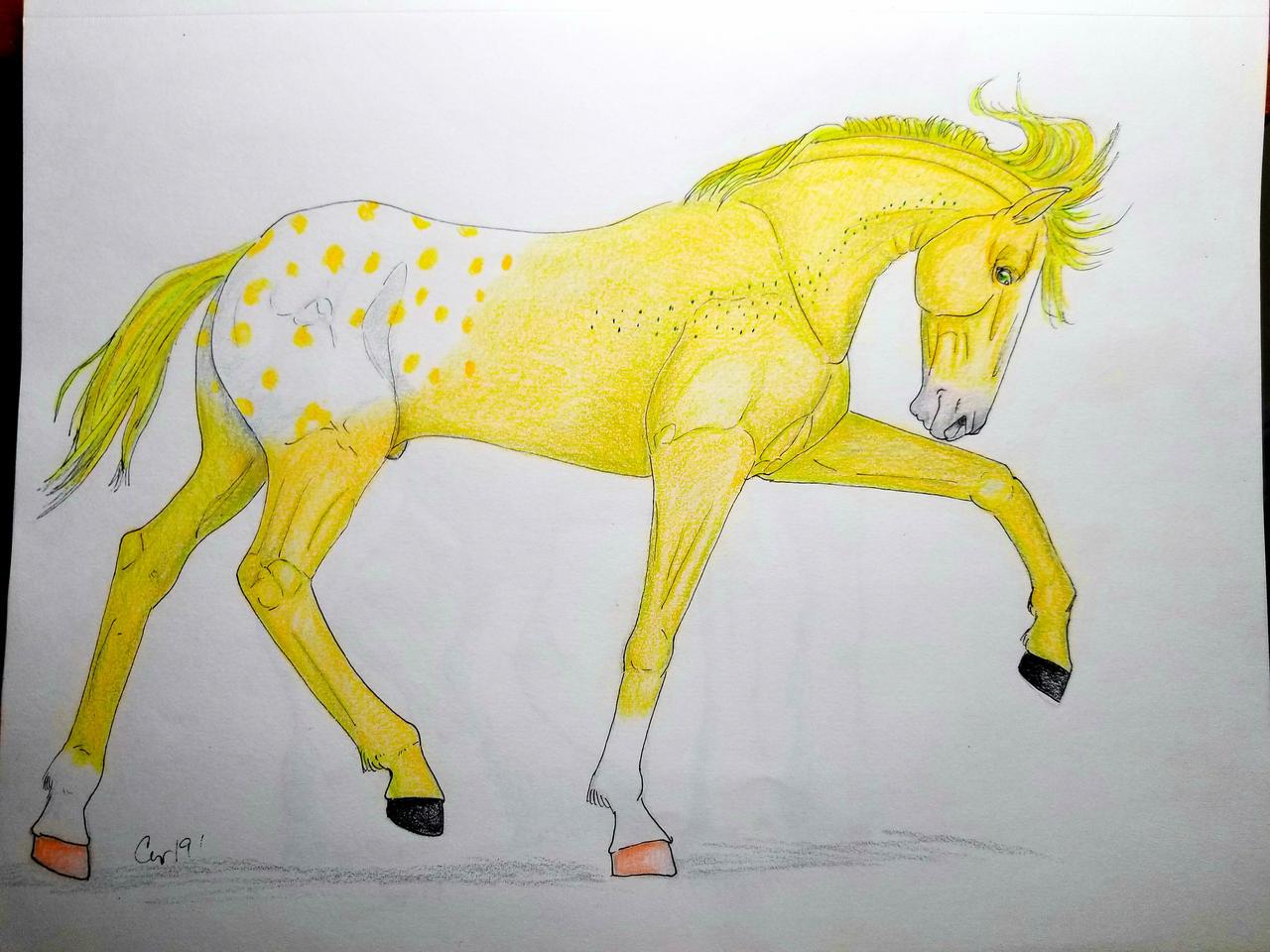 N5205 Stay Golden Ponyboy