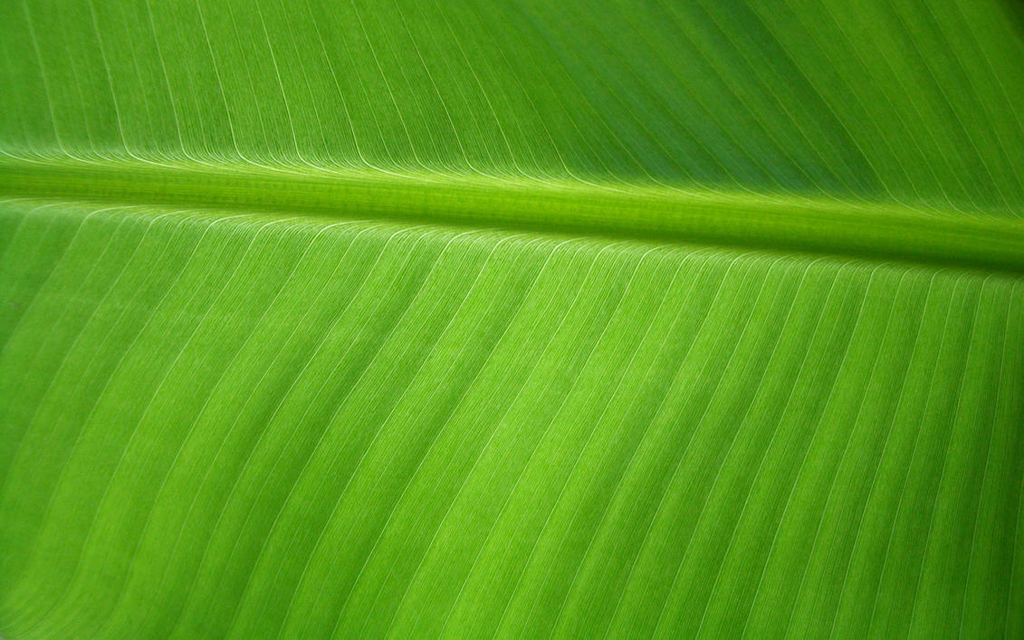 Banana Leaf By OrodrethC