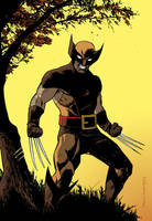 Wolverine by DeclanShalvey
