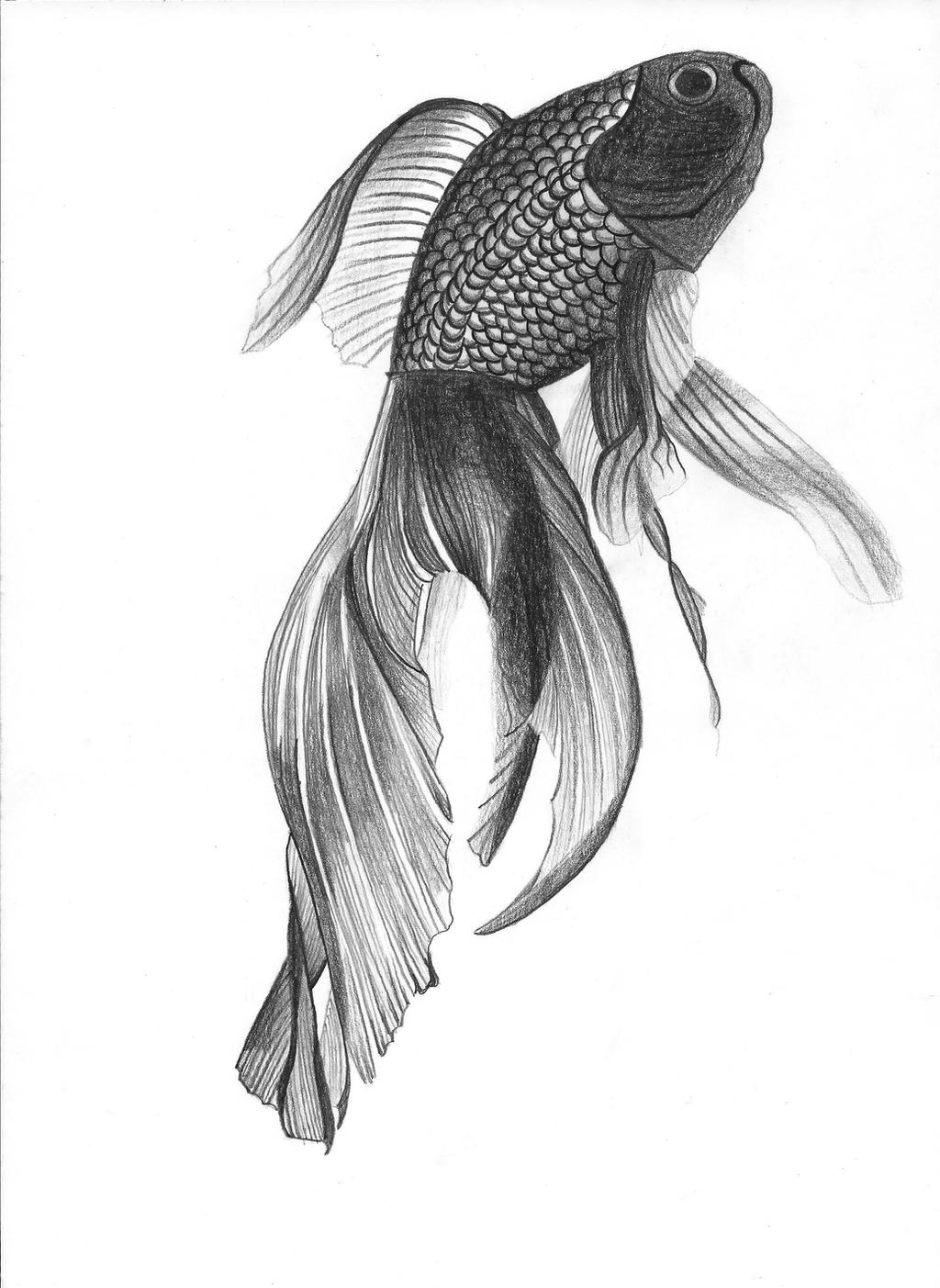 Angel fish drawings - photo#6